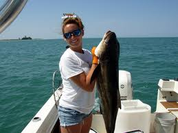 Cobia Fishing Guides