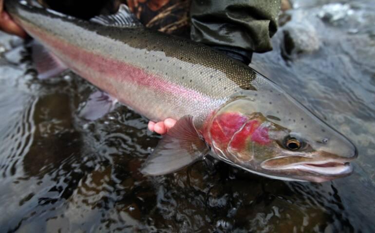 steelhead fishing on the rogue river