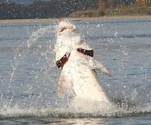 Sturgeon Fishing locations and seasons