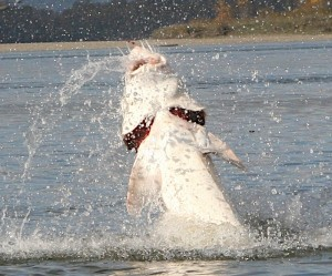Sturgeon Fishing Guides