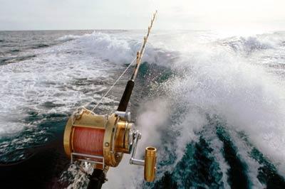 Cabo San Lucas Fishing Guides