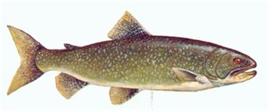 Lake of the Woods Lake Trout fishing guides