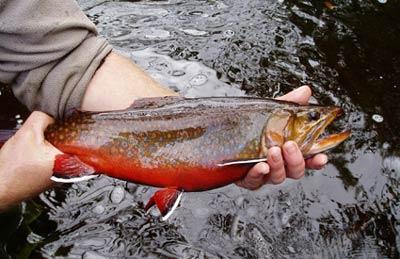 Prince Edward Island Fishing Guides