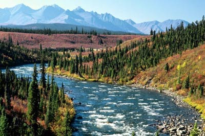 Yukon Fishing Charters