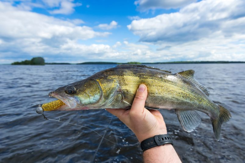Lake Winnipeg fishing guides