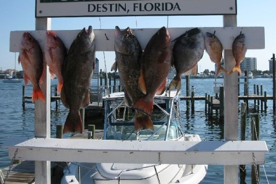 Destin florida deep sea fishing destin florida fishing for Charter fishing destin