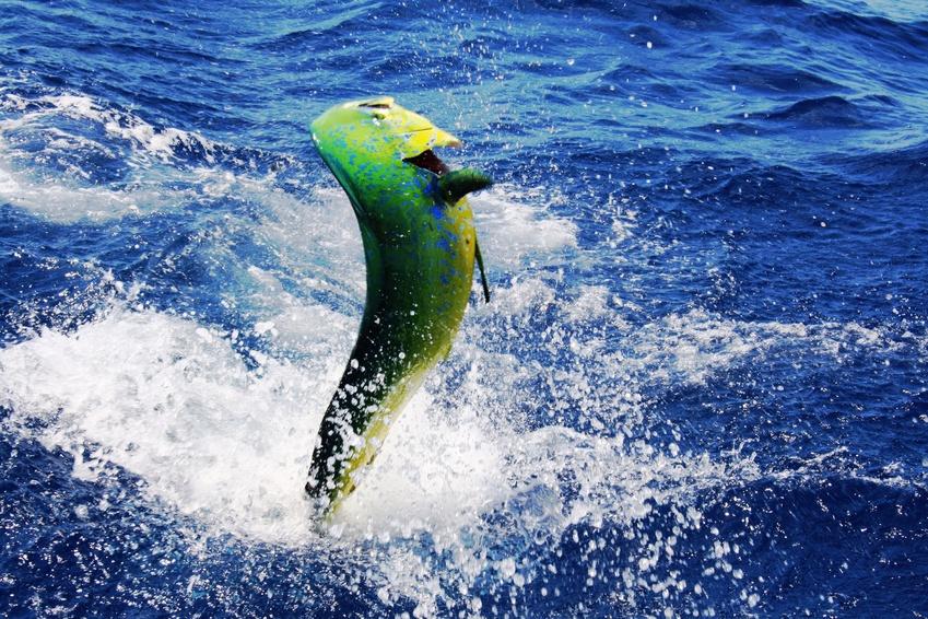 Fish species and fishing seasons information