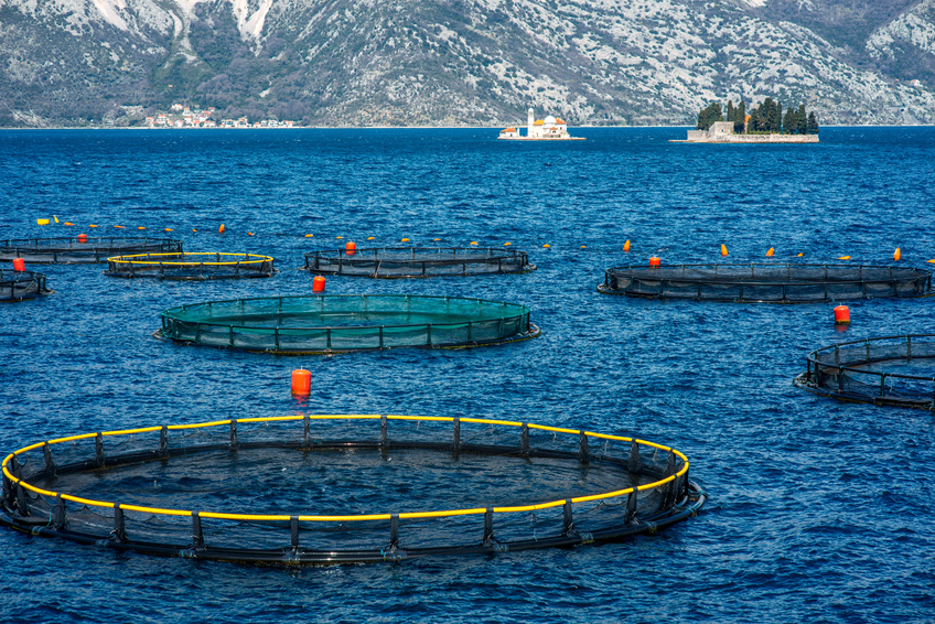 fish farming pen system