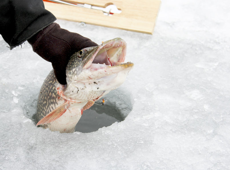 ice fishing derby northern pike