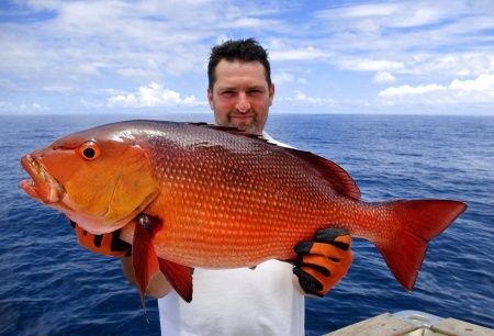 Costa Rica red snapper fishing charter