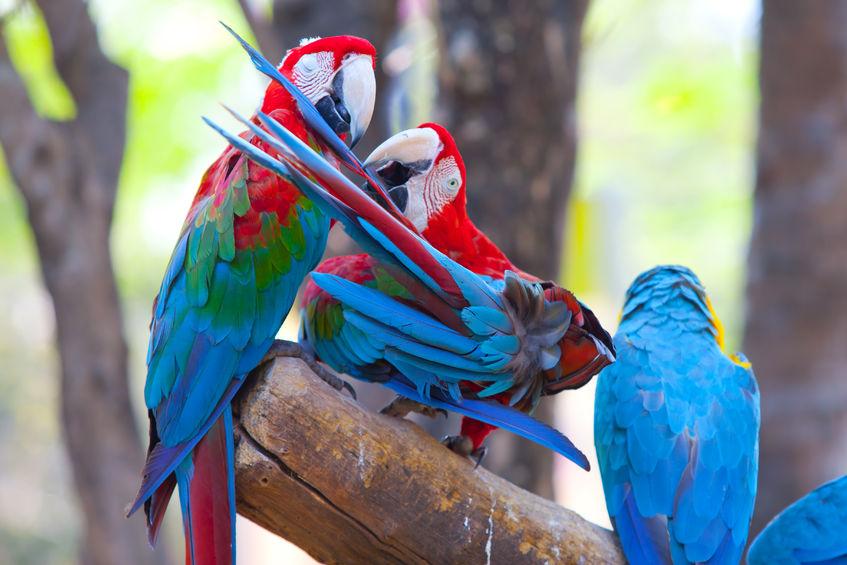Costa rica fishing scarlet macaw