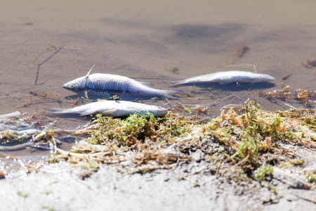 river fish dead from pollution