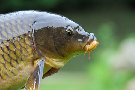 fishing for asian carp
