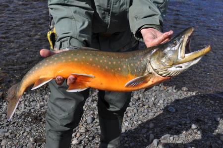fishing for arctic char