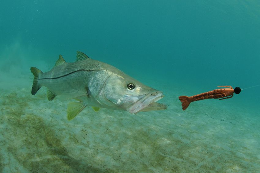 how to fish for snook