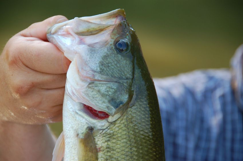 bass fishing tackle selection guide