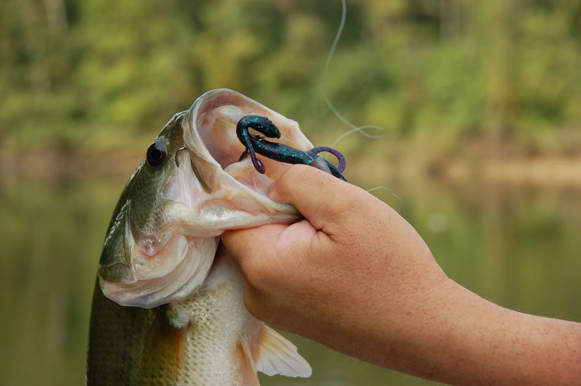 spring bass fishing