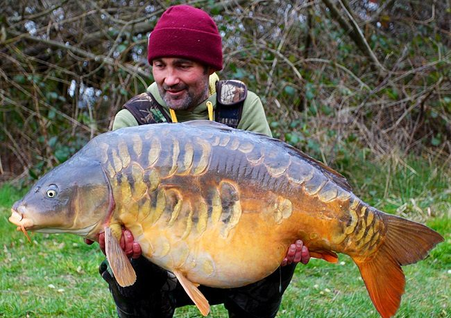 fishing scaled mirror carp