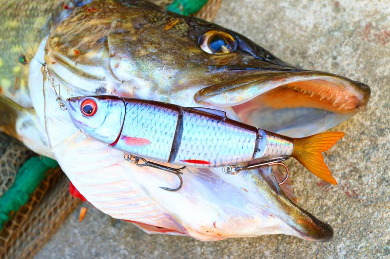 top lures for northern pike fishing