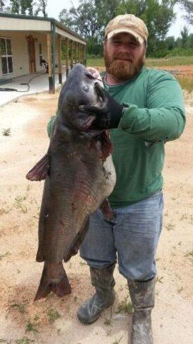 big louisiana catfish