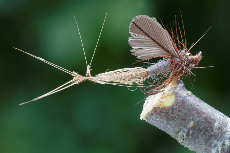 caddis dry fly fishing for trout in river