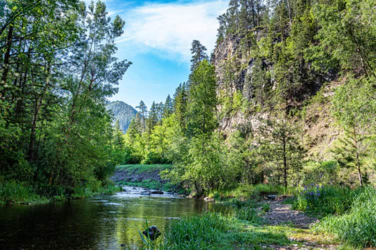 Fly fishing Spearfish Creek in the Black Hills